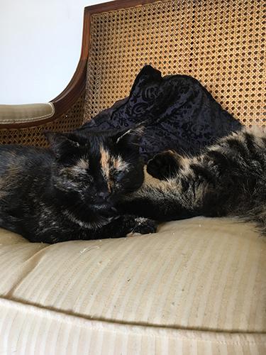 01102017_cat2.jpg