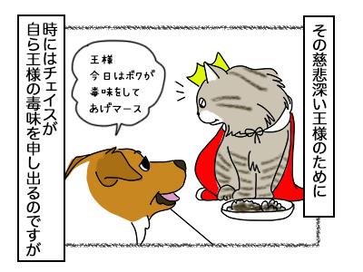 02102017_cat2mini.jpg