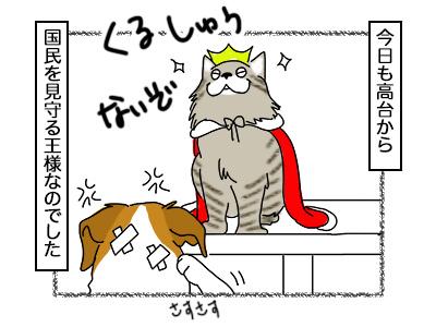 02102017_cat4mini.jpg