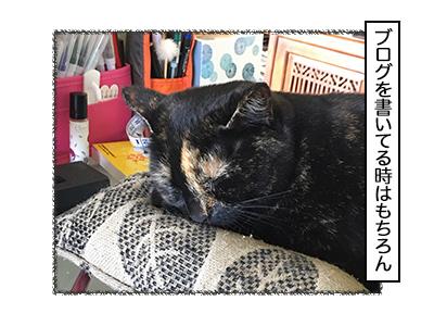 02112017_cat2mini.jpg