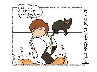 02112017_cat4mini.jpg