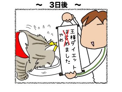 02122017_cat2mini.jpg