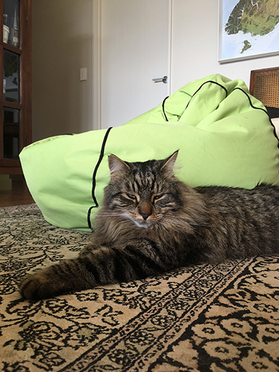 05122017_cat1.jpg