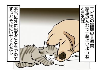 09102017_cat2mini.jpg
