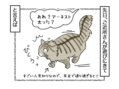 09102017_cat3mini.jpg