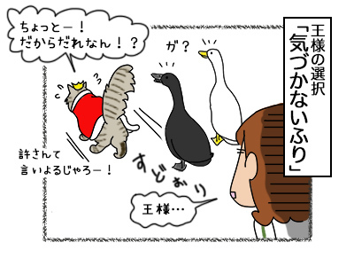 12102017_cat4.jpg