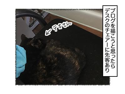 12122017_cat1mini.jpg