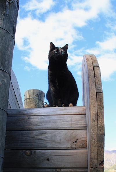 13102017_cat2.jpg