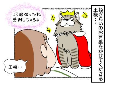 13112017_cat4mini.jpg