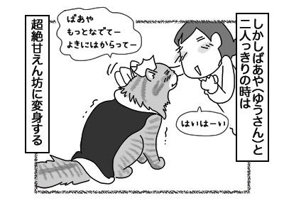 13122017_cat2mini.jpg
