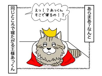 14112017_cat2mini.jpg
