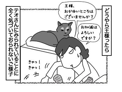14122017_cat2mini.jpg