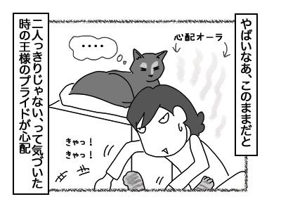 14122017_cat3mini.jpg