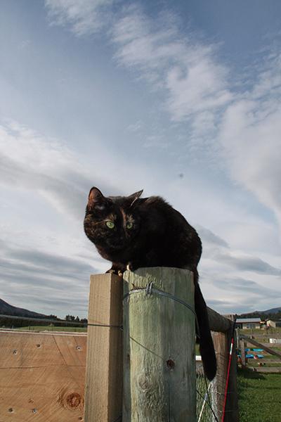 15102017_cat3.jpg