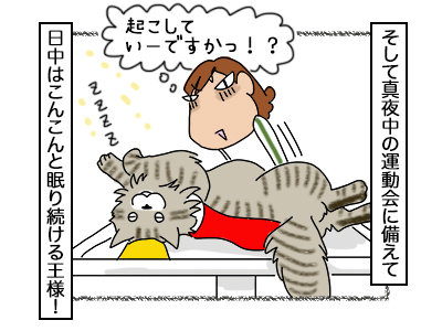 16102017_cat4mini.jpg
