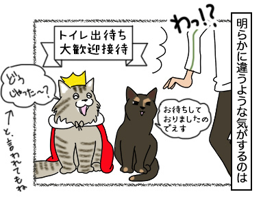 18102017_cat3mini.jpg