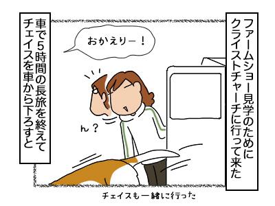 18112017_cat1mini.jpg