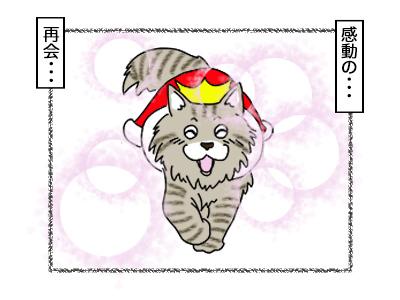 18112017_cat2Bmini.jpg