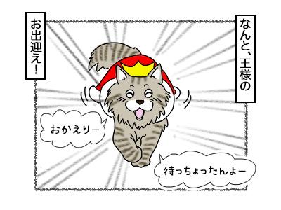 18112017_cat2mini.jpg