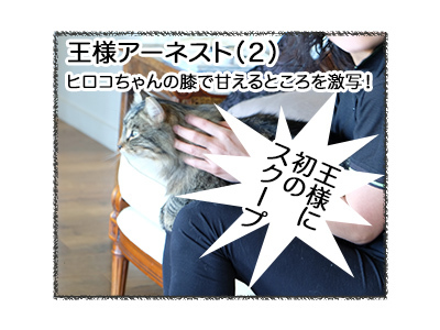 19112017_cat3mini.jpg