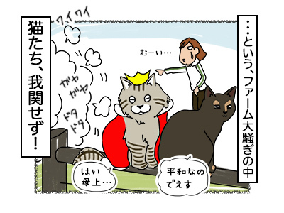 20112017_cat6mini.jpg