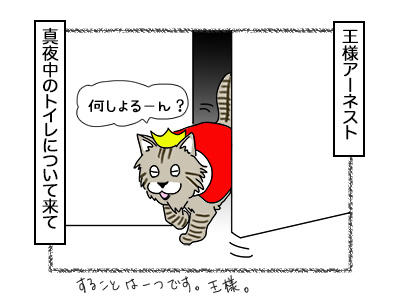 21112017_cat1mini.jpg