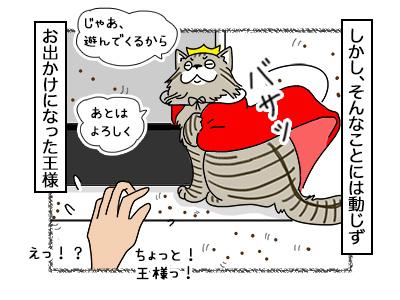 21112017_cat4mini.jpg