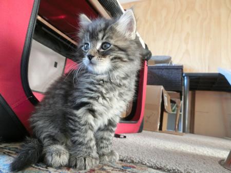 21122017_cat3.jpg