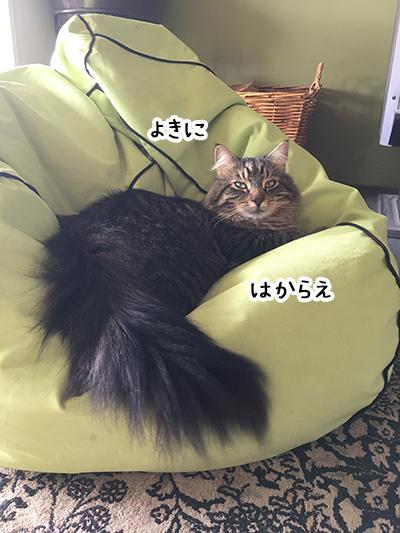 21122017_cat5.jpg