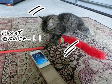 22122017_cat2.jpg