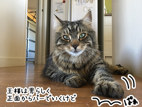 22122017_cat5.jpg