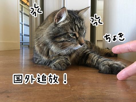 22122017_cat6.jpg