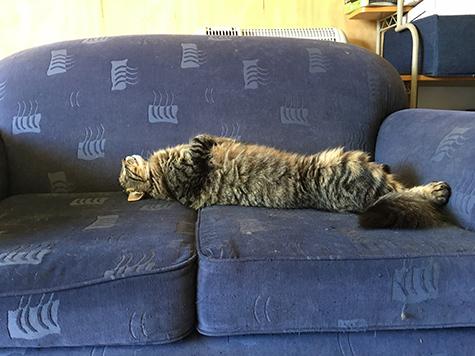 24112017_cat1.jpg