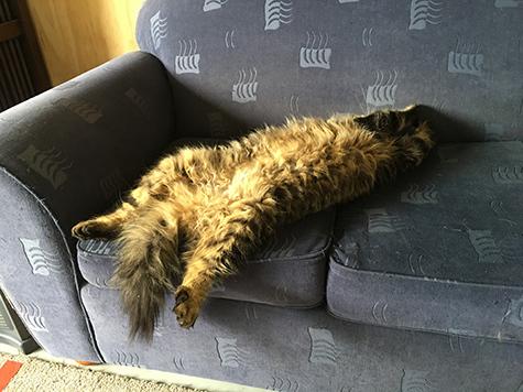 24112017_cat2.jpg