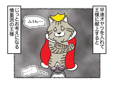 27112017_cat2mini.jpg