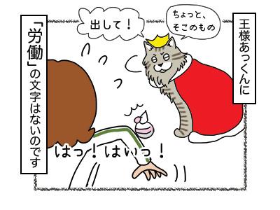 27112017_cat4mini.jpg