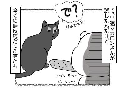 28112017_cat2mini.jpg