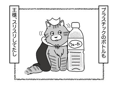 28112017_cat3mini.jpg
