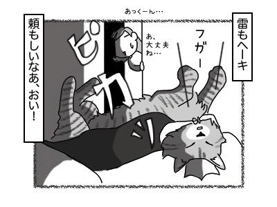 28112017_cat4mini.jpg