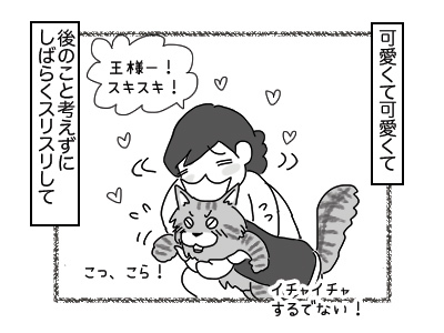 29112017_cat4mini.jpg