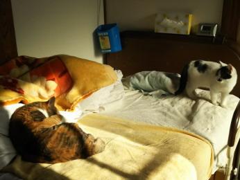 1階で寝る内猫2匹(三毛猫「里」とパンダ柄「いっせい」)