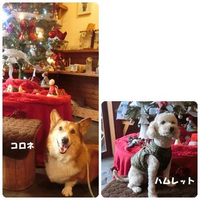 2017-12-154.jpg