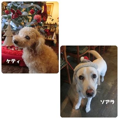 2017-12-2.jpg