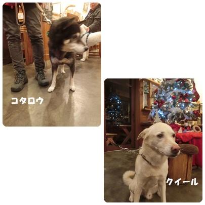 2017-12-28.jpg