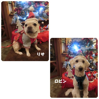 2017-12-29.jpg
