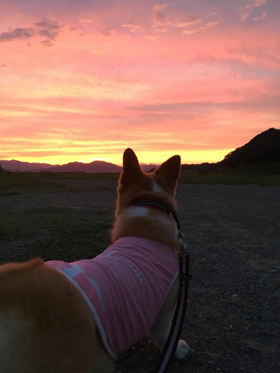真っ赤な夕焼けとわんこ