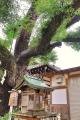富島神社20