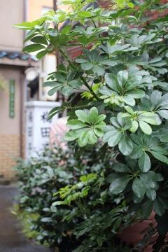 20171029台風3_MG_9013