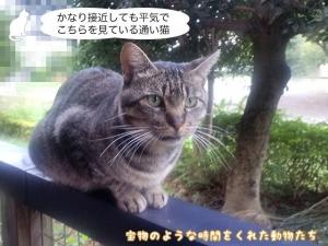 かなり接近しても平気でこちらを見ている通い猫