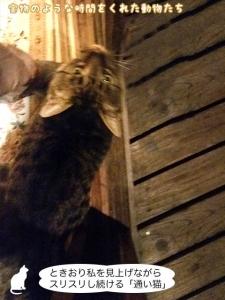 ときおり私を見上げながらスリスリし続ける「通い猫」